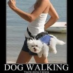 Dog Walking - Fanwood Pet Care